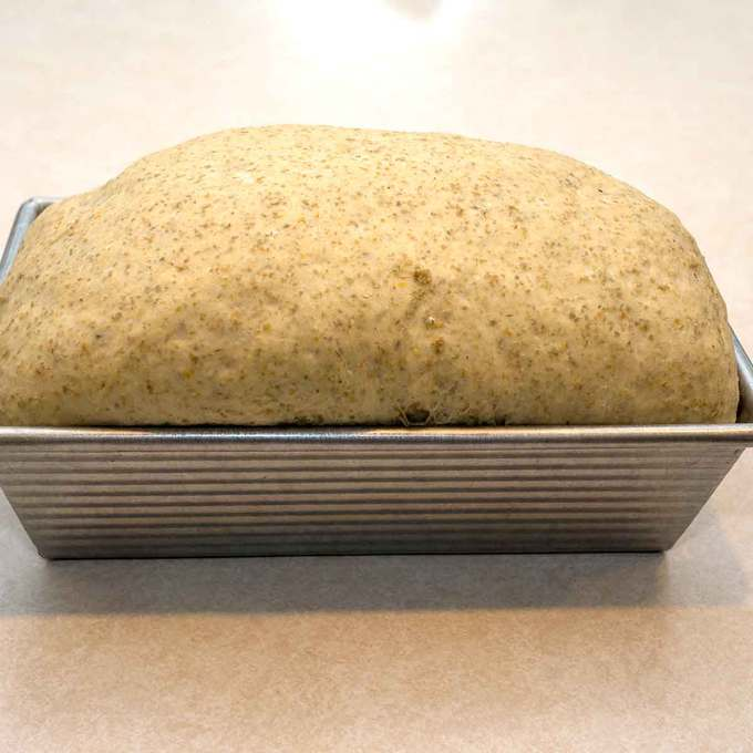 Risen Dough for Jewish Rye Bread