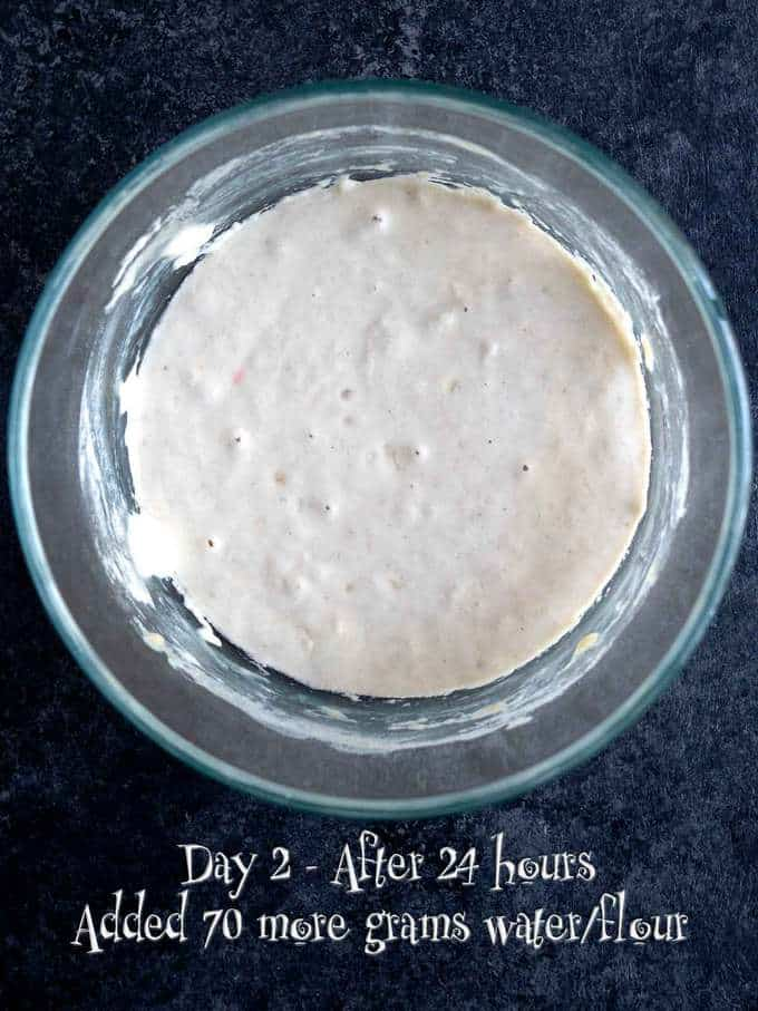 Day 2 of making Sourdough Starter
